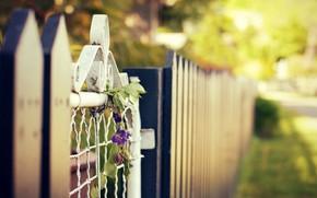 Картинка лето, цветы, город, улица, забор, калитка, blur, bokeh
