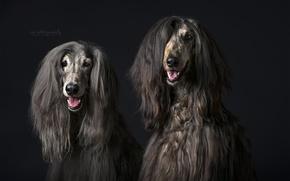 Картинка собаки, фон, взгляд