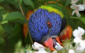 Картинка цветы, дерево, птица, клюв, попугай