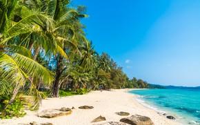 Картинка песок, море, лето, пальмы, Пляж, Тропики