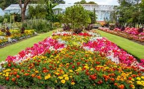 Картинка цветы, Великобритания, United Kingdom, флоксы, бархатцы, сады, Swansea Botanic Gardens