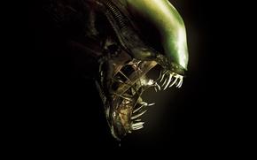 Картинка green, cinema, ufo, monster, Alien, movie, fang, film, head