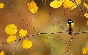 Обои птица, листва, осень, ветка, синица