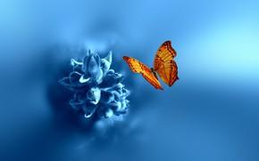 Обои природа, цветок, боке, макро, бабочка