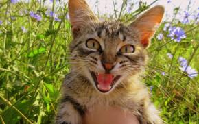 Картинка трава, кот, котёнок, Meduzanol ©