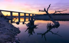 Картинка мост, река, дерево, утро