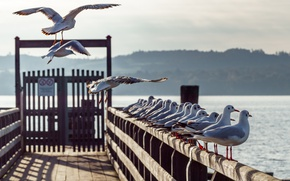 Картинка чайки, Германия, причал, Бавария, Bavaria, Ammersee
