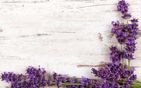 Картинка ветки, wood, flowers, лаванда, lavender
