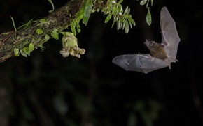 Картинка полет, крылья, ветка, летучая мышь