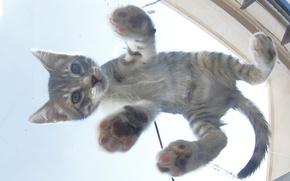 Картинка котенок, малыш, вид снизу