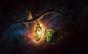Картинка свет, бабочки, ночь, ветка, разрушение, кокон, rebirth