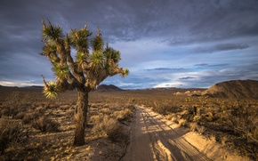 Картинка california, joshua tree national park, san bernardino county