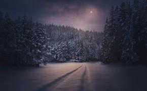 Картинка зима, лес, снег, ночь, следы, луна, домик