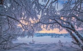 Обои зима, снег, Финляндия