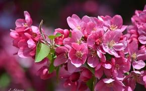 Картинка цветы, дерево, ветка, лепестки, цветение