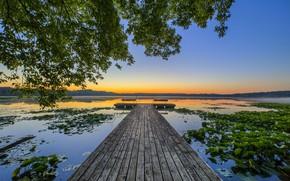 Картинка озеро, мостик, лотосы