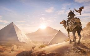 Картинка песок, птица, пустыня, верблюд, пирамиды, египет, Assassin's Creed Origins