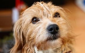 Картинка собака, взгляд, верность, друг