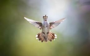 Обои птица, фон, крылья