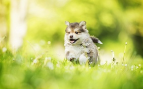 Картинка собака, весна, щенок