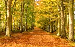 Картинка Осень, Лес, Fall, Листва, Дорожка, Autumn, Colors, Forest, Trees, Leaves, Path