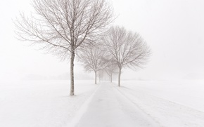 Картинка зима, дорога, снег, деревья, туман