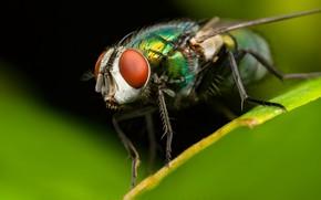Картинка природа, муха, фон