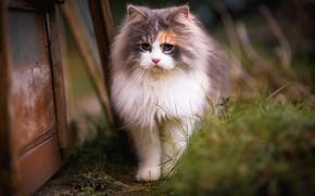 Обои кошка, трава, кот, взгляд, котенок, фон, доски, портрет, размытие, весна, мордочка, двор, прогулка, красотка, котёнок, ...