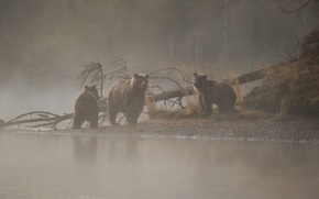 Картинка река, дерево, утро, медведи, медвежата, медведица, утренний туман, три медведя