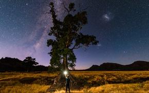 Картинка звезды, свет, природа, дерево, человек, млечный путь