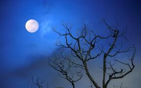 Картинка небо, ветки, дерево, луна, Ночь