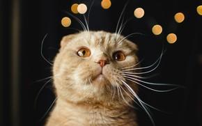 Картинка кот, усы, портрет, мордочка, котейка