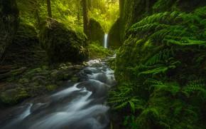 Обои Oregon, лес, водопад, папоротник, Mossy Grotto Falls, США