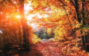 Обои Light, trees, beautiful, autumn, forests, Ukraine, foliage