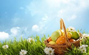 Картинка небо, трава, солнце, цветы, корзина, ромашки, весна, Пасха, flowers, spring, Easter, eggs, decoration, Happy, яйца …