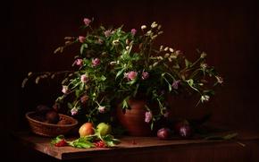 Картинка ягоды, букет, фрукты, натюрморт, полевые цветы, калина