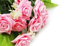 Обои розы, букет, roses, flowers, pink