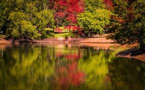 Картинка солнце, деревья, пруд, парк, Англия, Mount Lofty Botanic Garden