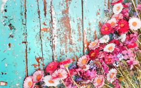 Обои хризантемы, фон, доски, цветы