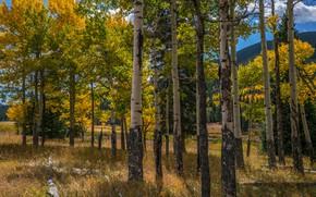 Картинка осень, лес, солнце, облака, деревья, горы, парк, США, Rocky Mountain National Park