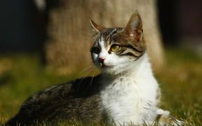 Картинка кошка, трава, кот, взгляд, свет, природа, котенок, дерево, поляна, котёнок, полосатый, серый с белым