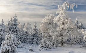 Картинка зима, лес, Germany, Rhineland-Palatinate, Thranenweier