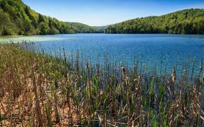 Картинка лес, небо, деревья, озеро, камыш, солнечно, Хорватия, Plitvice national park