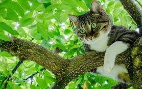 Картинка кошка, кот, листья, дерево, листва, на дереве