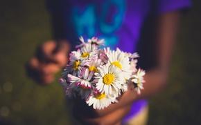 Картинка цветы, букет, полевые
