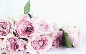 Картинка розы, букет, pink, blossom, flowers, petals, bouquet, roses, decoration
