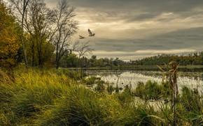 Обои лес, небо, трава, деревья, птицы, тучи, озеро, пасмурно, США, Minnesota, Chisago