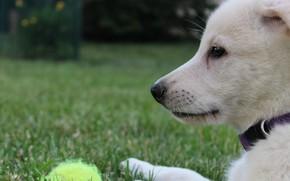 Картинка Трава, Собачка, Dog