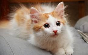 Картинка котенок, пушистый, пятнистый