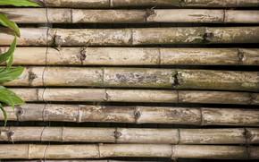 Картинка листья, фон, бамбук